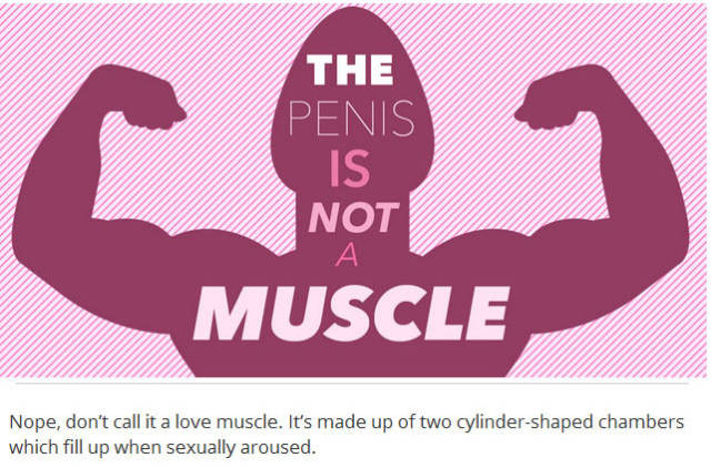 Things You Probably Didn't Know about Penises in General