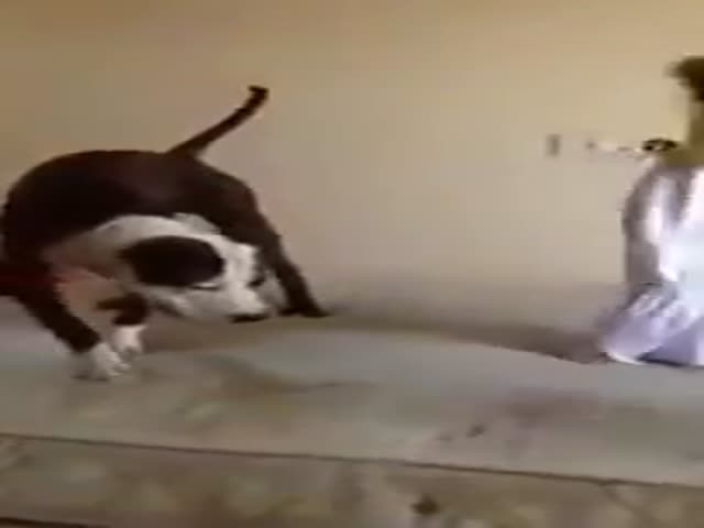 Cute Girls Give Their Dog a Lesson on How to Jump on the Bed Like a Pro