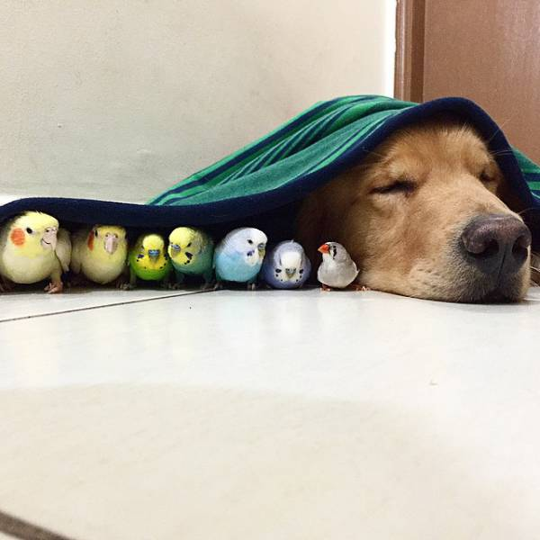 An Strange and Unlikely Group of Animal Friends