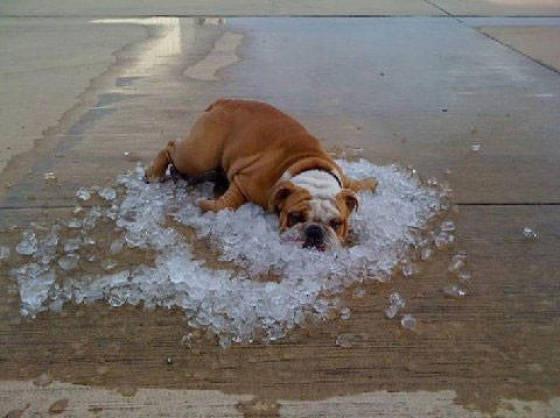 Damn It's Hot Outside