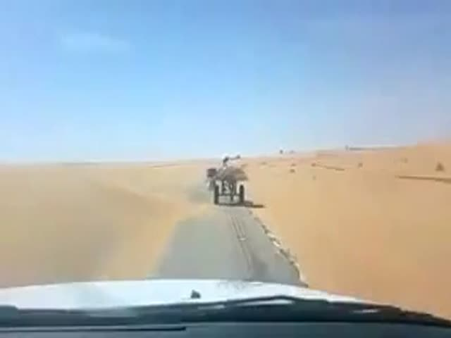 This Donkey Understands the Rules of the Road