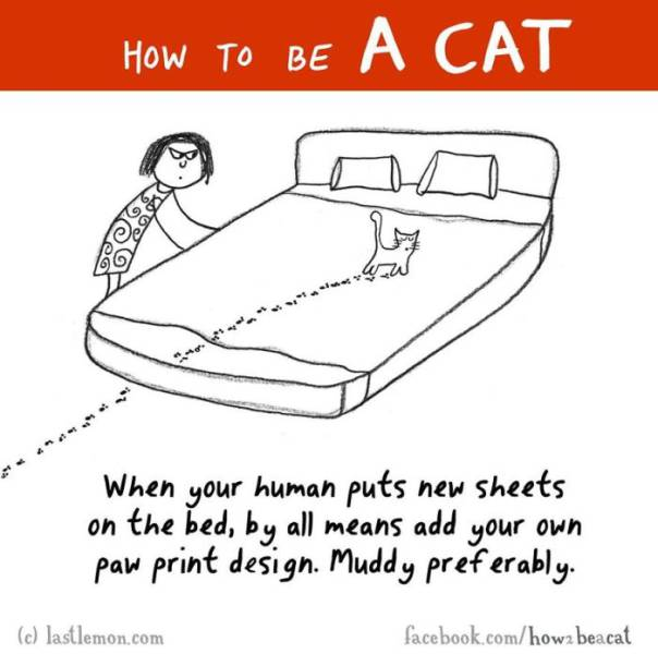 A Cute Illustrated Guide on How to Be a Cat