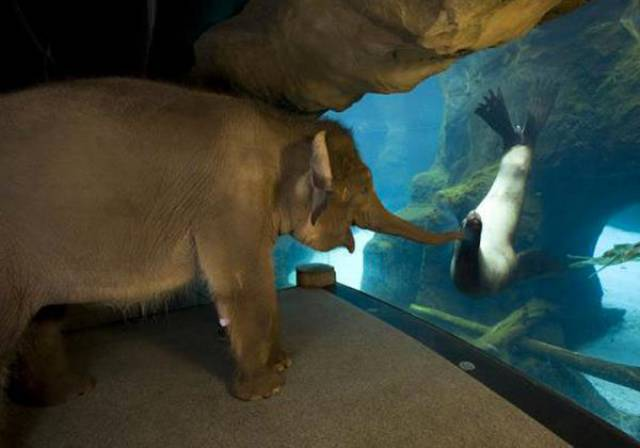 Amusing Aquarium Photos