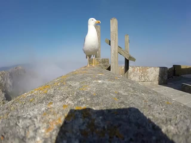 Seagull Thief Films the Island with a Stolen GoPro Camera