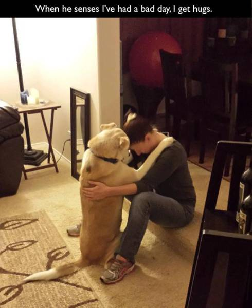 Dogs Understand What It Means to Love Unconditionally