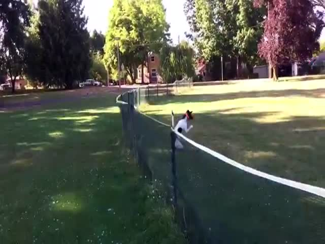 Ninja Dog Front Flips over a Fence Like a Boss