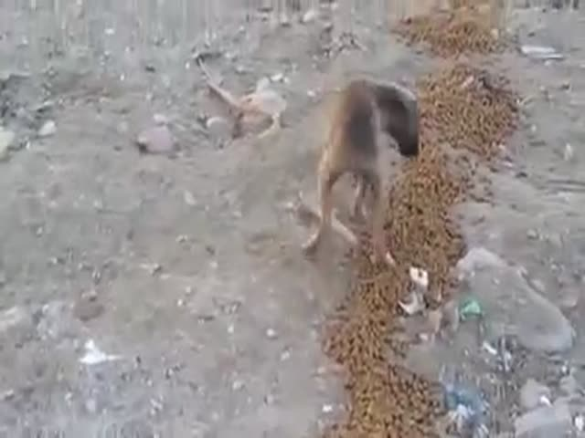 The Heart-warming Moment When a Hungry Puppy Finally Gets Food