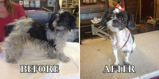 Amazing Before and After Pics of Rescue Dogs