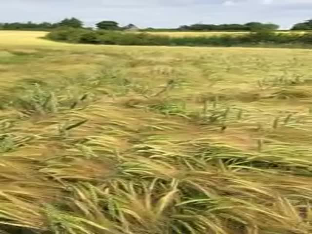 This Dog Has a Unique Method of Finding His Owner in a Field