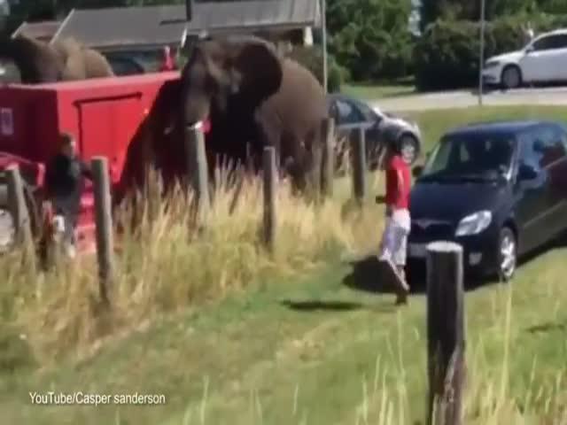 Circus Elephants Cause Chaos on the Beach in Denmark