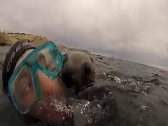 An Adorable Encounter between a Diver and a Seal