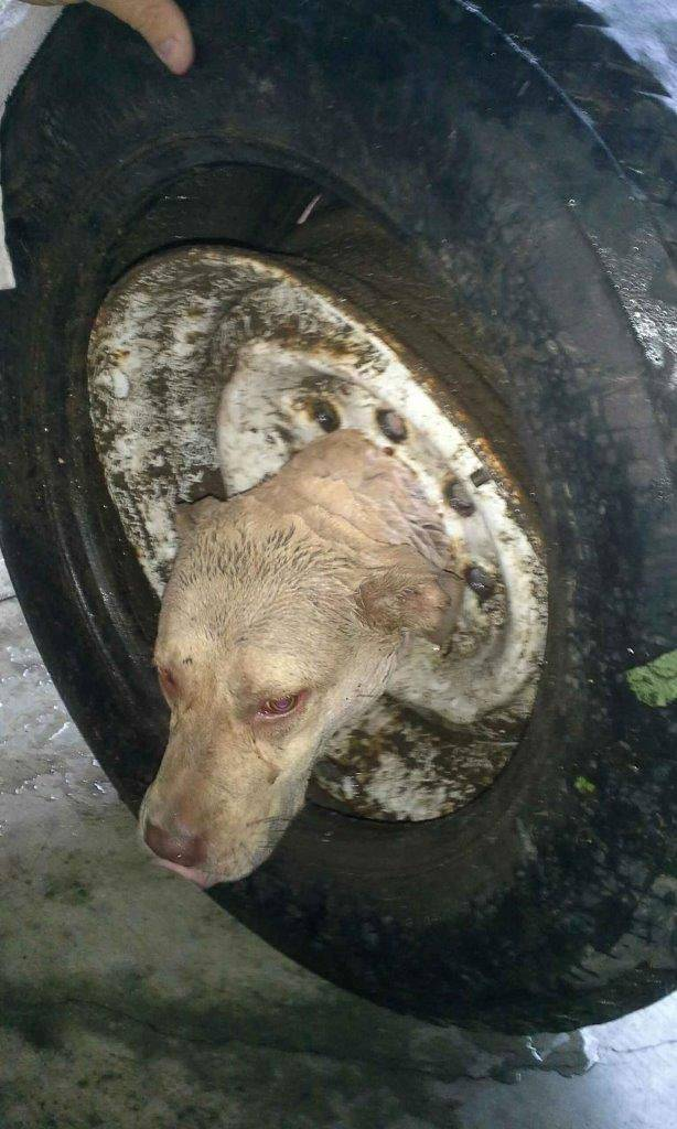 Stray Dog Gets His Head Stuck in a Wheel Rim and Firefighters Come to the Rescue