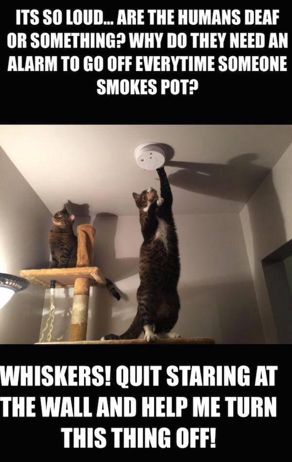 Amusing Memes To Make You Laugh Out Loud 38 Pics