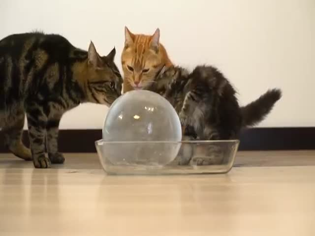 These Cats Can't Get Enough of This Giant Block of Ice