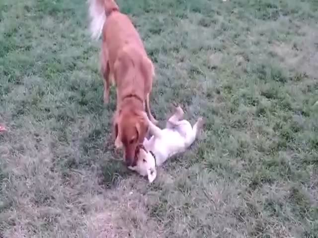 Puppy And Dog Become Best Friends