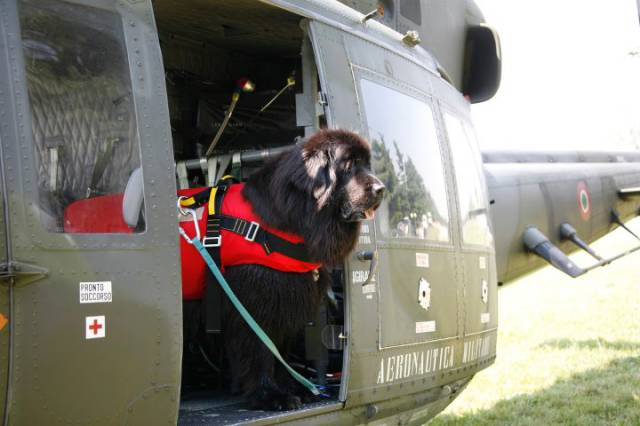 The Newfoundland Rescue Dog Is an Essential Member of the Coast Guard Team