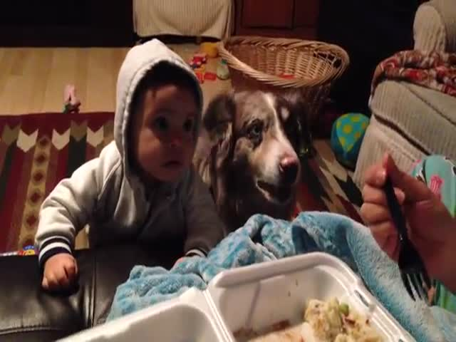 "Dog Steals the Show When It Says ""Mama"" Before the Baby Even Has a Chance"