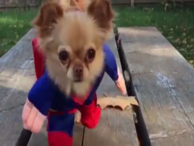 A Cute Compilation of Heroic Dogs