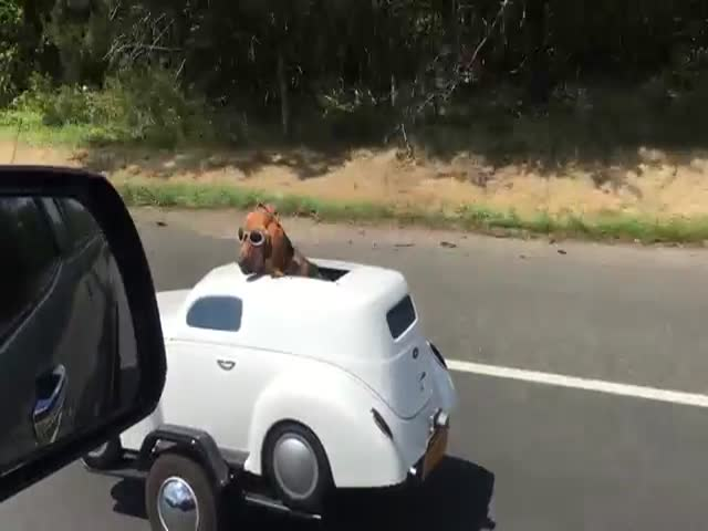 This Biker's Dog Has His Own Custom Built Car