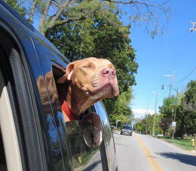 Adorable Adopted Dogs on Their First Car Rides with Their New Families