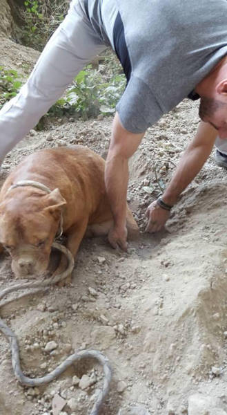 Kind Stranger Finds a Dog Buried Alive and Comes to Its Rescue