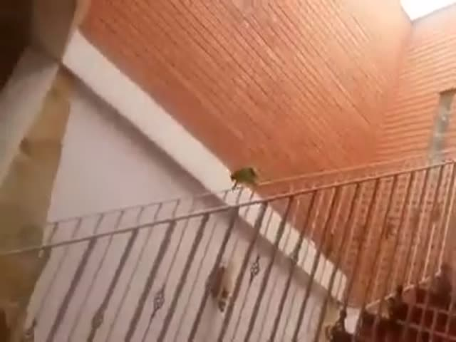 Parrot Slides Down The Banister