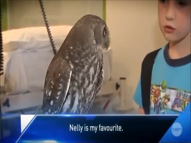 Nelly the Owl Is Cool, Calm and Collected