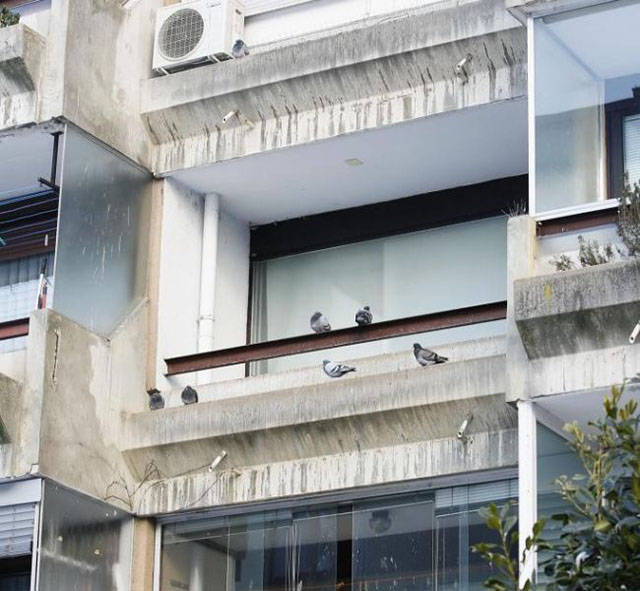 Dude Lets Stray Pigeons Move into His Apartment and the Result Is Beyond Words