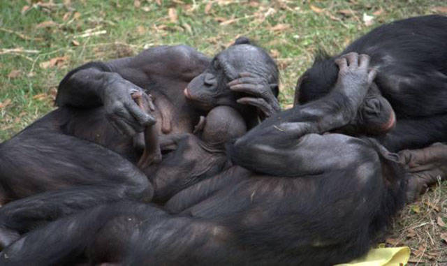 The Weirdest Sexual Habits in the Animal Kingdom