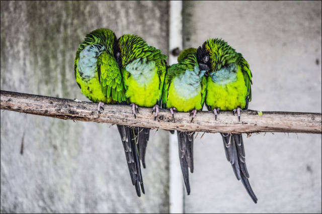 Wild Birds Cuddle Up to Stay Warm in the Cold