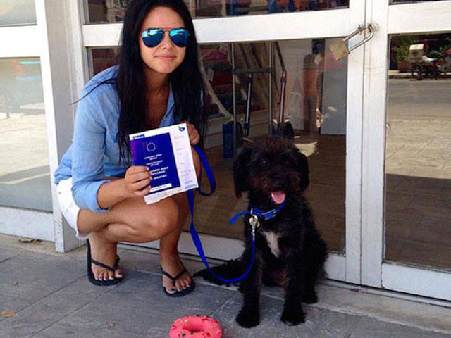 Women Travels across the Country to Adopt a Dog That Came to Her Rescue
