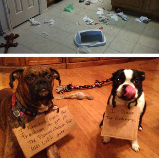 Dogs That Are Not in the Good Books