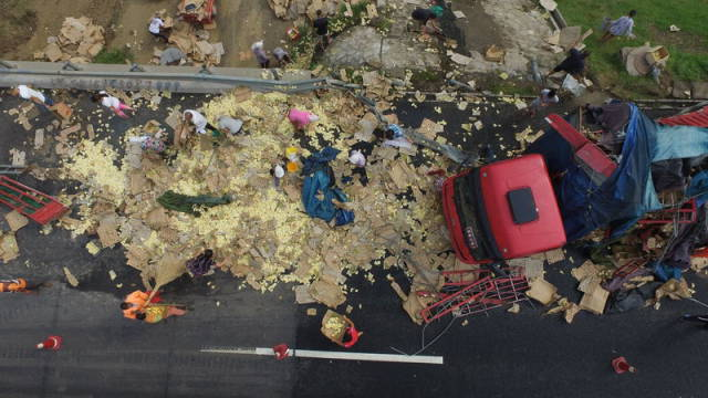 Giant Cargo Truck Drops Thousands of Live Chickens onto the Roadway