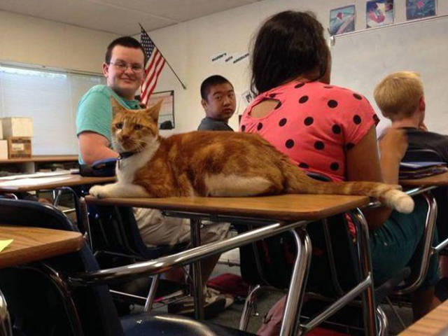 The Cat Who Knows That Education Is Important