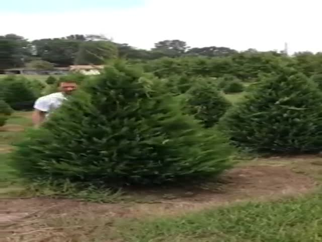 This Dude Can Trim Trees Like a True Master