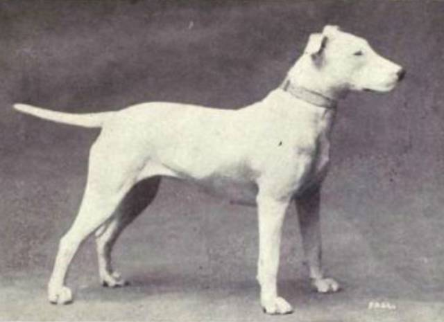 How the Dog Species Has Changed over the Past Century