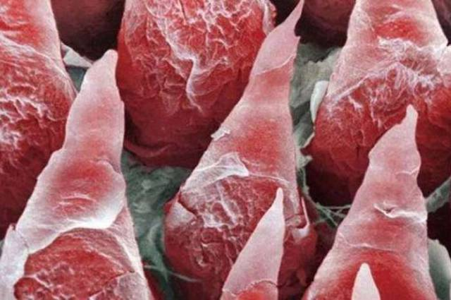 The Human Body Under a Microscope