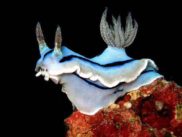 The Oddest Animals That Exist in Real Life