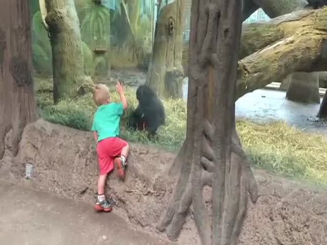 Cute Kid Does a Mini Work Out with an Energetic Gorilla