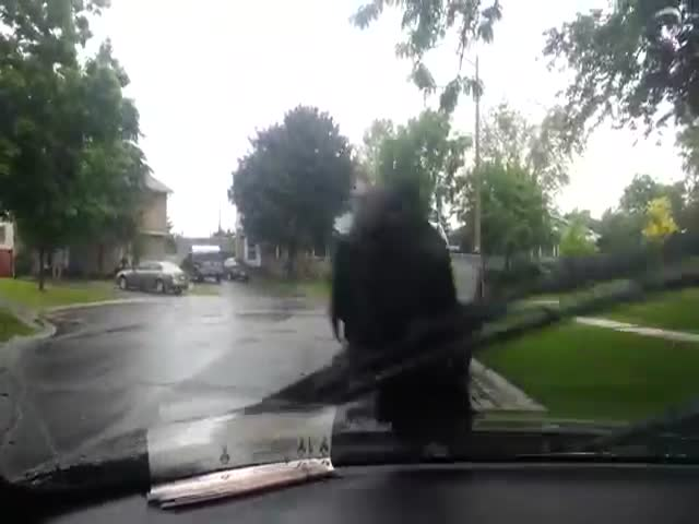 Crazy Crow Refuses to Let Go of Guy's Windshield Wiper