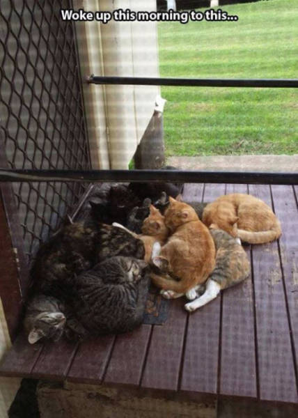 Cats Make Their Own Rules about Life