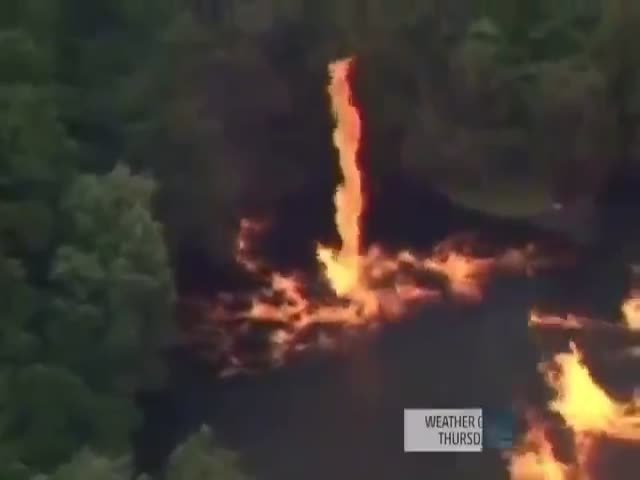 Forest Goes Up in a Fiery Inferno