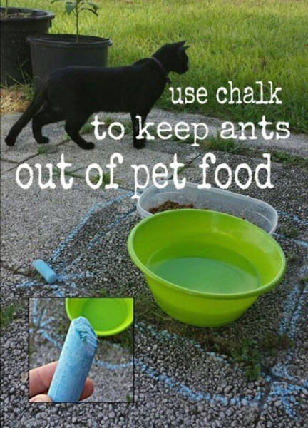 Useful Tricks That All Dog Owners Should be Aware of