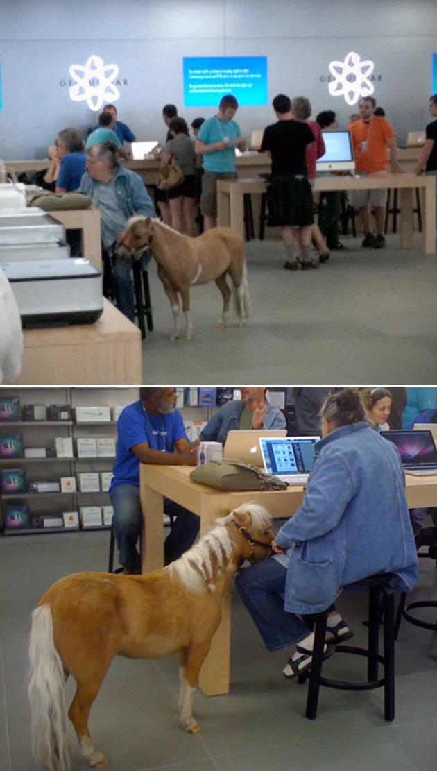 The Craziest Things That Have Ever Happened in the Apple Store