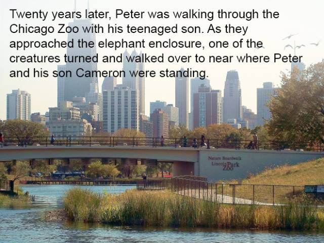 Elephants Have the Best Memory of Any Mammal on the Planet