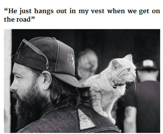 Rescued Kitten Becomes a Biker's Furry Road Trip Companion