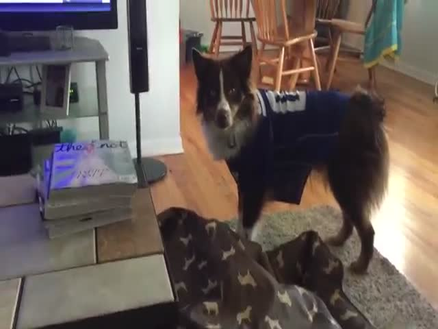 All Dogs Should Learn This Trick