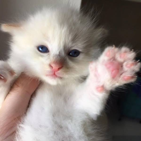 Cute Kitten Found Wedged between Two Large Boulders
