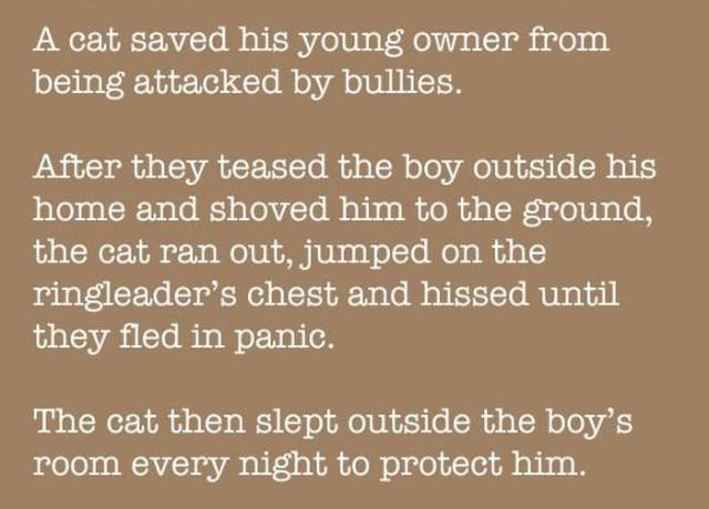 This Cat Is a Hero