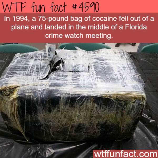 Weird Facts That Are Almost too Crazy to be True